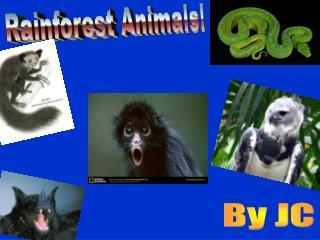 Rainforest Animals!