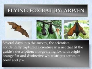 FLYING FOX BAT BY: ARWEN