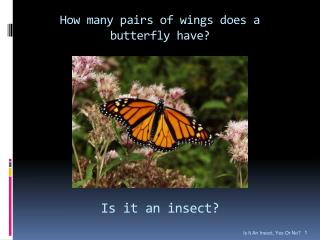 How many pairs of wings does a butterfly have?