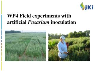 WP4 Field experiments with artificial  Fusarium  inoculation