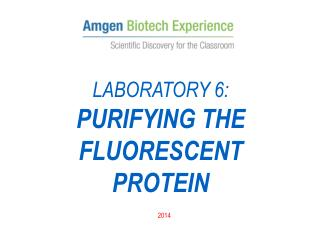 LABORATORY 6: PURIFYING THE  FLUORESCENT  PROTEIN