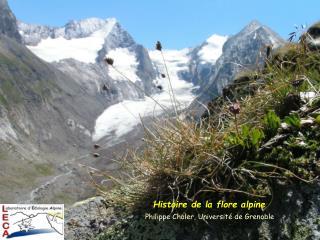 Histoire de la flore alpine