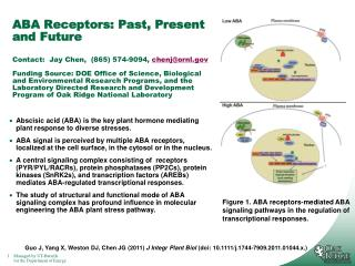 Abscisic acid (ABA) is the key plant hormone mediating plant response to diverse stresses.