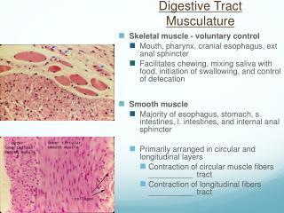 Digestive Tract Musculature