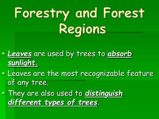 Forestry and Forest Regions  Leaves are used by trees to absorb sunlight.  Leaves are the most recognizable feature of a