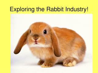 Exploring the Rabbit Industry!