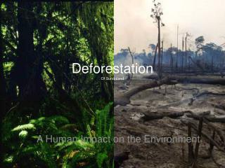 Deforestation  Of Sundaland