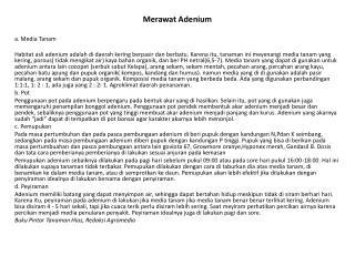 Merawat Adenium a. Media Tanam