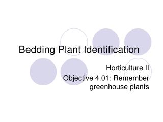 Bedding Plant Identification