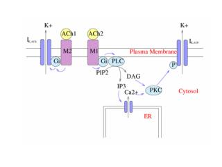 Fluorescenza Fluorescenza dinamica EPR NMR Langmuir monolayer AFM