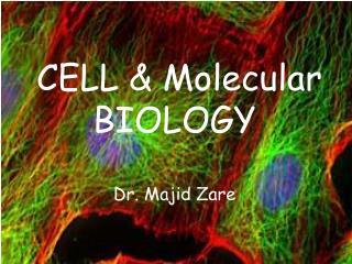 CELL & Molecular BIOLOGY Dr. Majid Zare