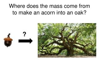 Where does the mass come from to make an acorn into an oak?