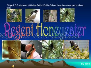 Regent Honeyeater