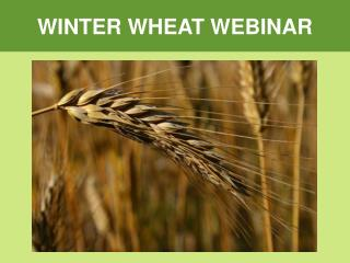 WINTER WHEAT WEBINAR