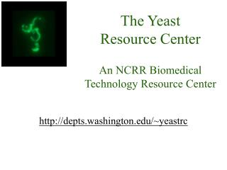 The Yeast  Resource Center