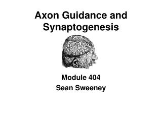 Axon Guidance and Synaptogenesis