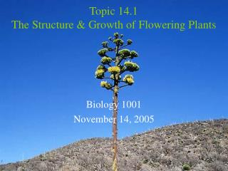 Topic 14.1 The Structure & Growth of Flowering Plants