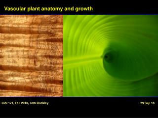 Vascular plant anatomy and growth