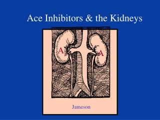 Ace Inhibitors & the Kidneys