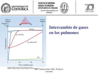 Intercambio de gases en los pulmones