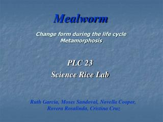 Mealworm Change form during the life cycle Metamorphosis