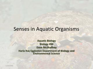 Senses in Aquatic Organisms