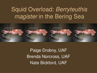 Squid Overload:  Berryteuthis magister  in the Bering Sea