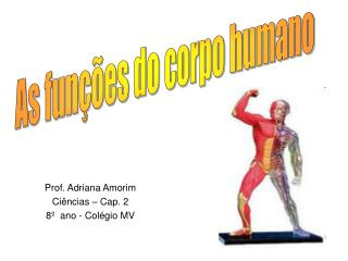 Prof. Adriana Amorim Ciências – Cap. 2 8º  ano - Colégio MV