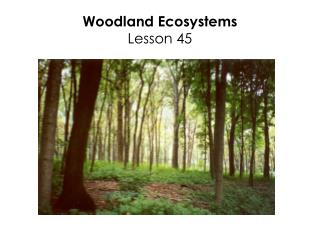 Woodland Ecosystems Lesson 45