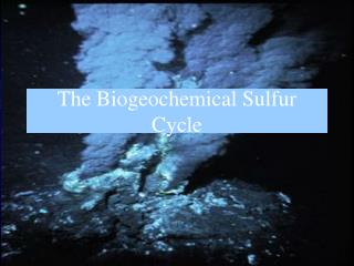 The Biogeochemical Sulfur Cycle