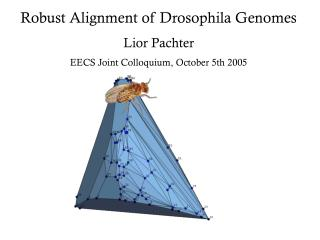 Robust Alignment of Drosophila Genomes Lior Pachter EECS Joint Colloquium, October 5th 2005