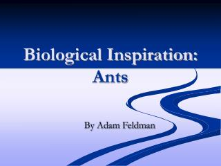 Biological Inspiration: Ants