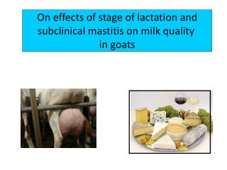 On effects of stage of lactation and  subclinical  mastitis on milk quality  in  goats