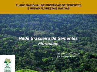 Rede Brasileira de Sementes Florestais