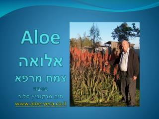 Aloe אלואה צמח מרפא כתבה חיה  מרקוביץ סלור aloe-vera.co.il
