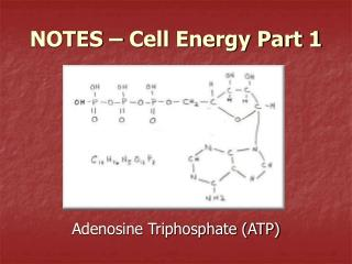 NOTES – Cell Energy Part 1