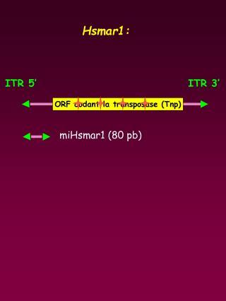 ITR 5'