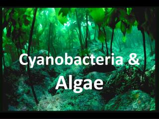 Cyanobacteria &  Algae