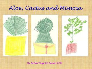 Aloe, Cactus and Mimosa