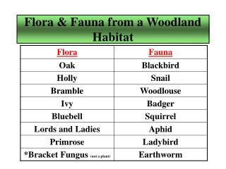 Flora & Fauna from a Woodland Habitat