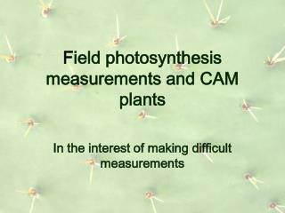 F ield photosynthesis measurements and CAM plants