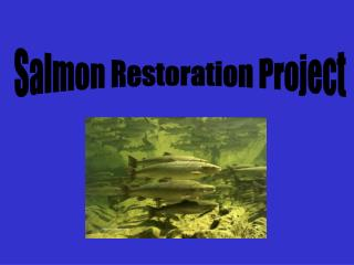 Salmon Restoration Project