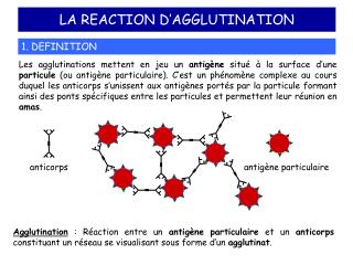LA REACTION D'AGGLUTINATION