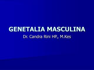 GENETALIA MASCULINA