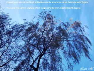 Copacii sunt efortul nesfârşit al Pământului de a vorbi cu cerul. Rabindranath Tagore