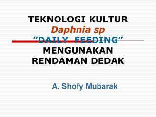 TEKNOLOGI KULTUR  Daphnia sp   DAILY  FEEDING  MENGUNAKAN  RENDAMAN DEDAK