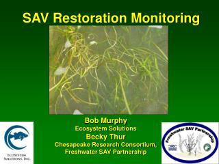 SAV Restoration Monitoring