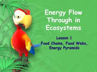Energy Flow Through in Ecosystems