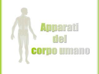 Apparati  del  corpo umano