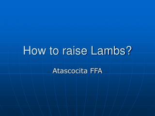 How to raise Lambs?